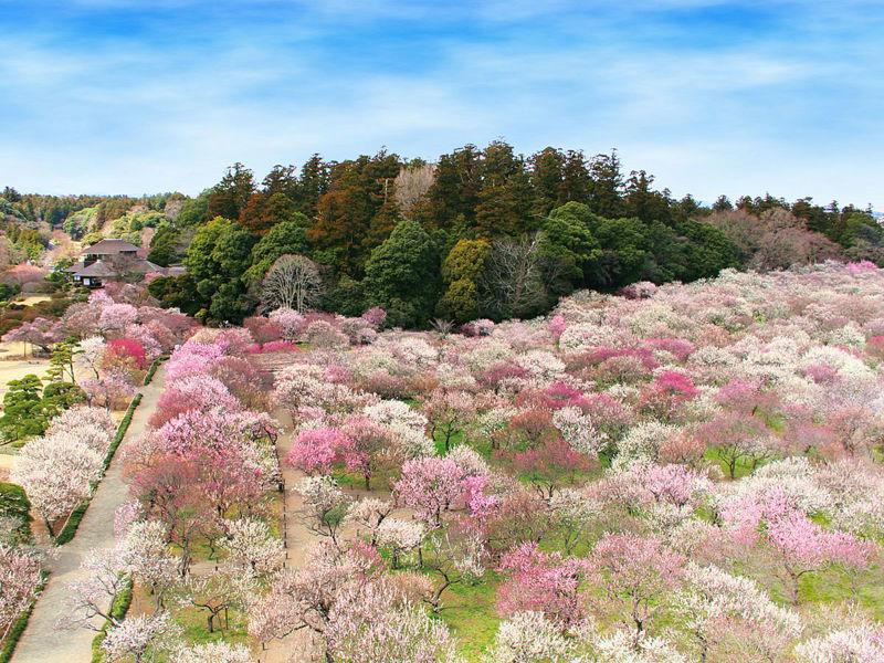 春の偕楽園